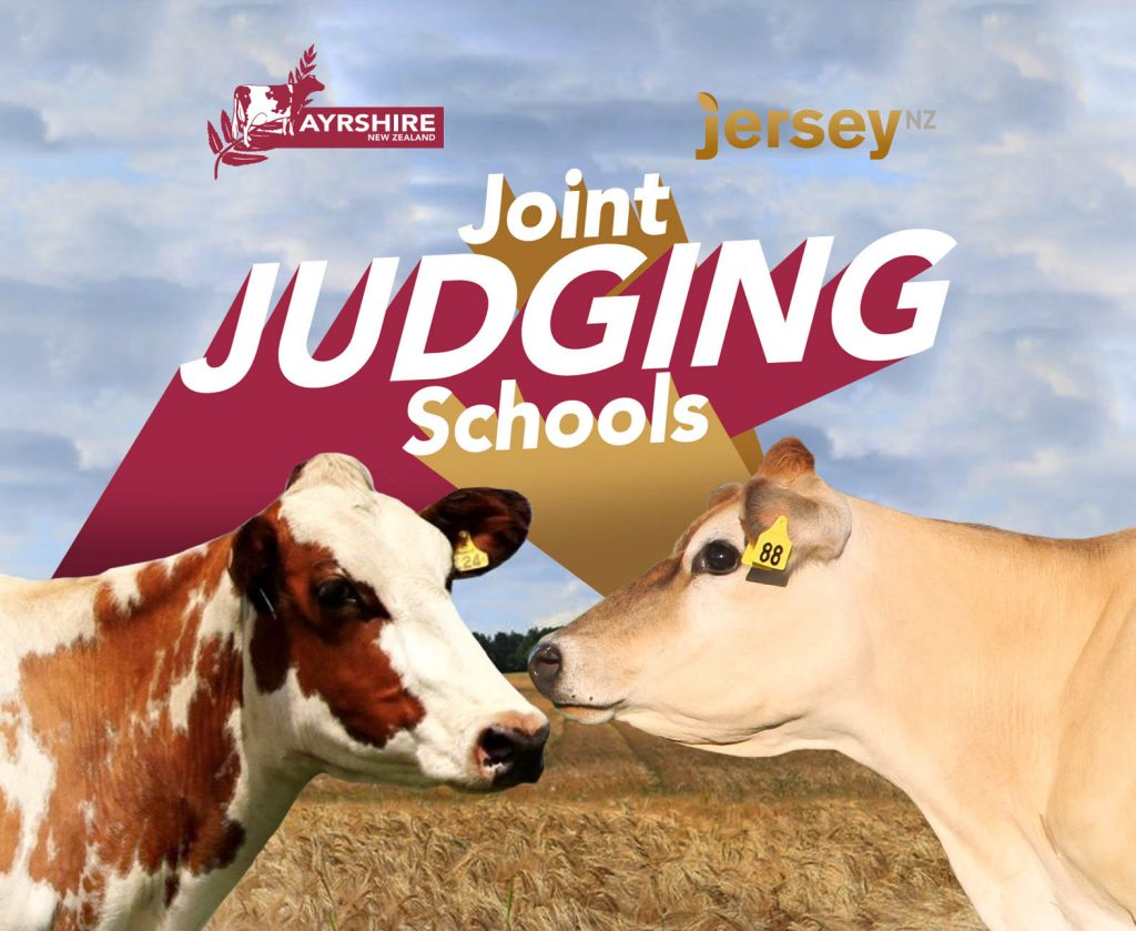 Jersey and Ayrshire joint Judging schools
